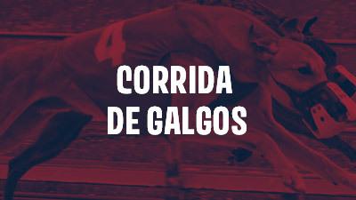 corrida de galgos brasil